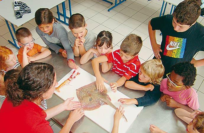 Image activité-enfants-découverte-milieu-marin Classe de découverte Côté Découvertes