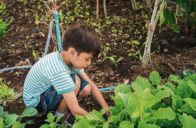 Image jardinage Classes de découverte Côté Découvertes