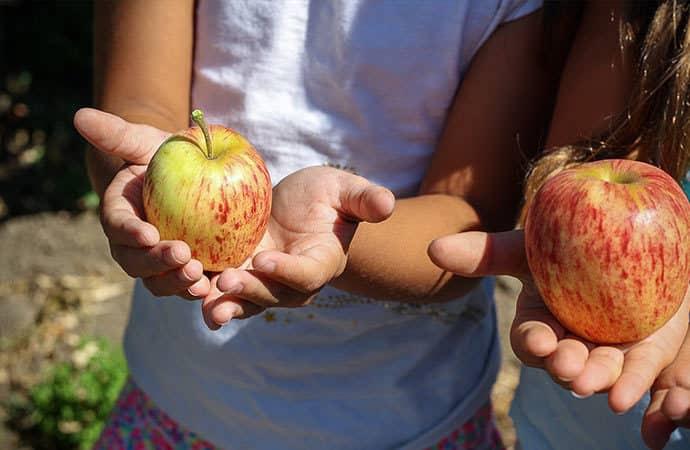 Image pomme-du-potager Classes de découverte Côté Découvertes